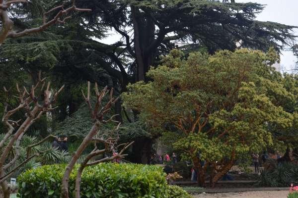 Никитский ботанический сад весной 2019. Фото Никита