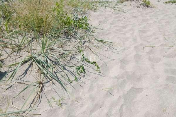 Чистейший пляжный песок. Фото Штормового