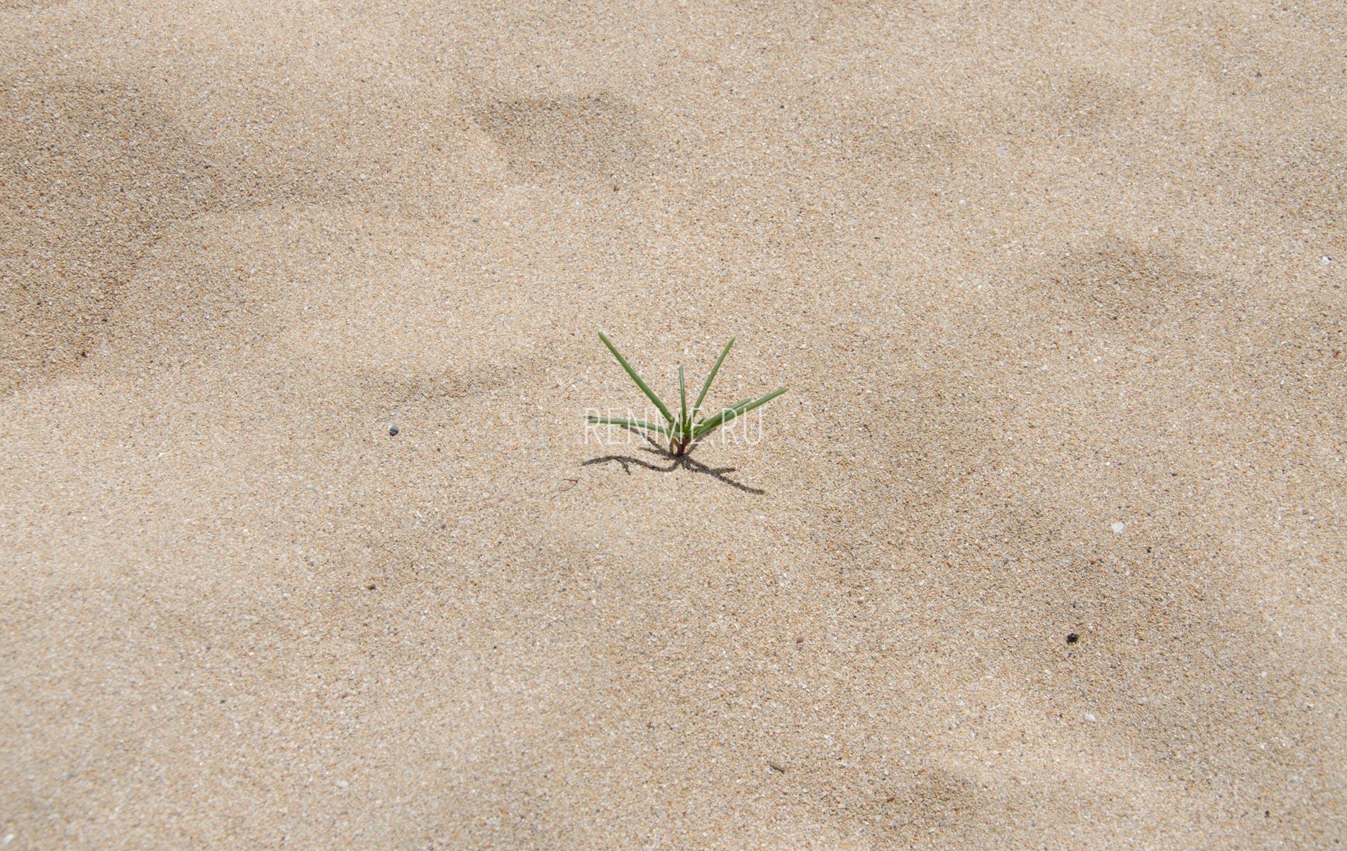 Золотой песок. Фото Заозёрного