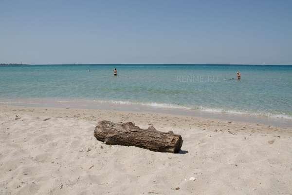 Бревно на пляже. Фото Оленевки