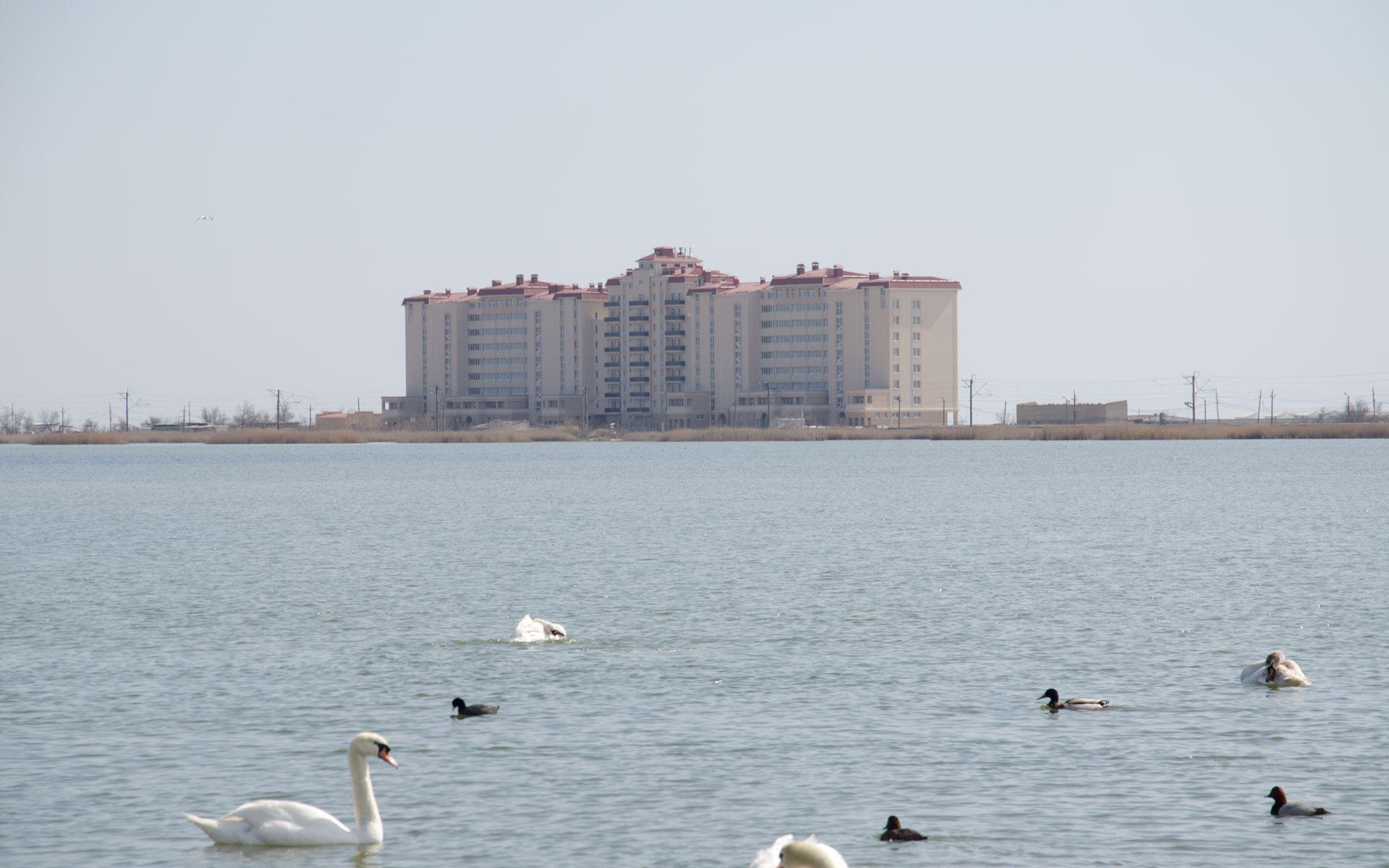 Лебединое озеро. Фото Евпатории