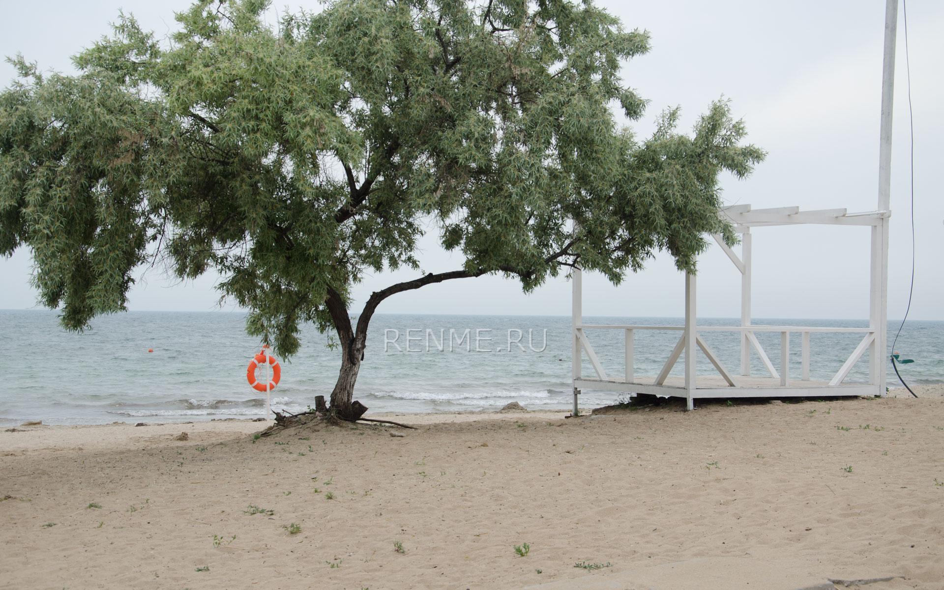 Лох серебристый на пляже в Крыму. Фото Заозёрного