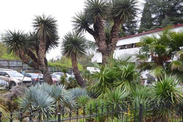 Никитский ботанический под Ялтой. Фото Никита