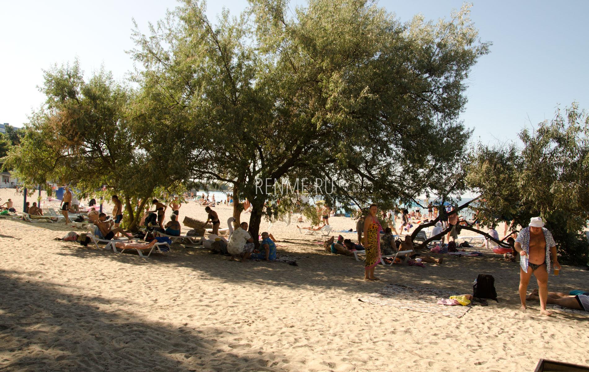 Пляж с живой тенью. Фото Черноморского