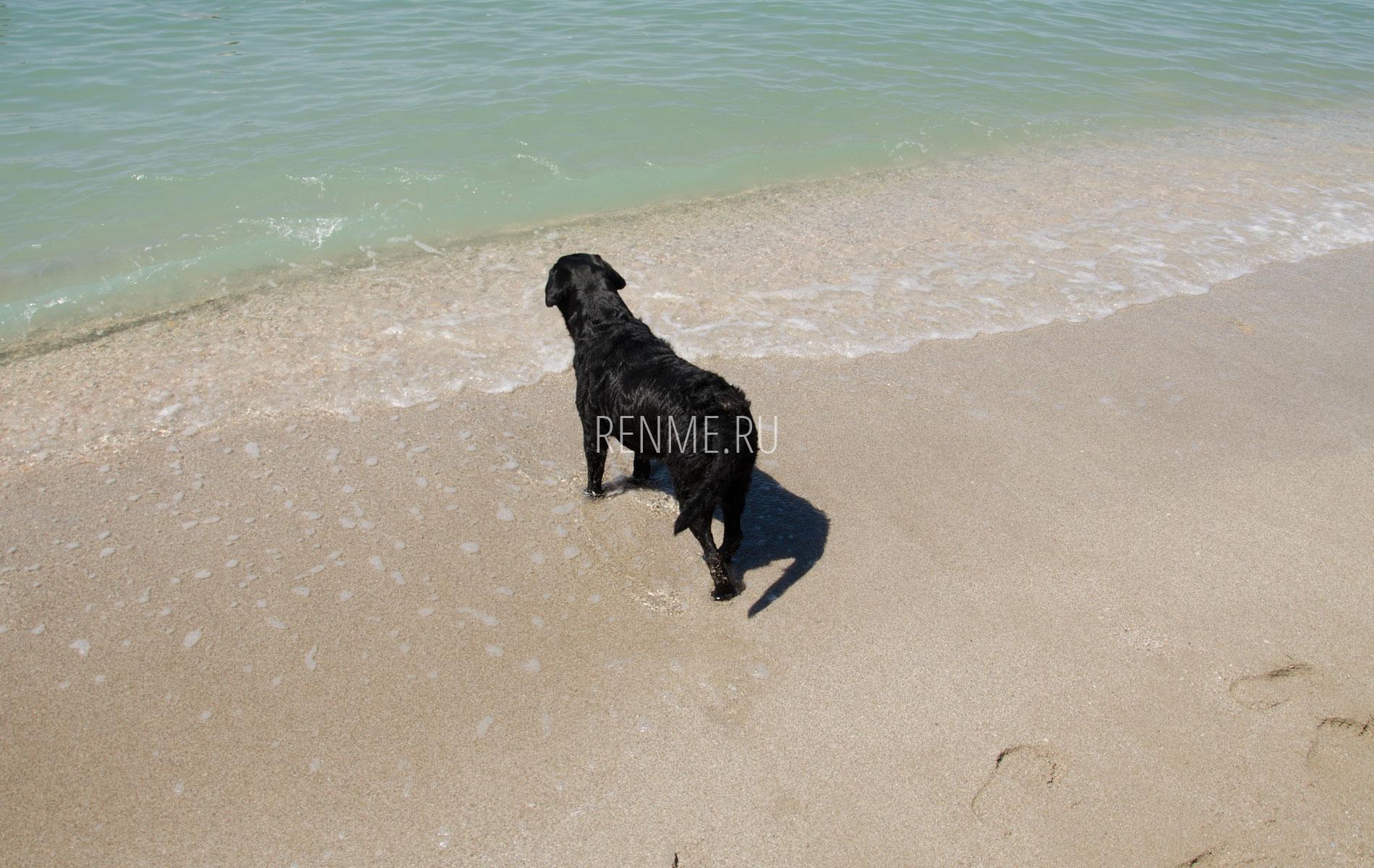 Собака на пляже. Фото Стерегущего