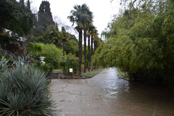 Красивый Никитский ботанический сад. Фото Никита