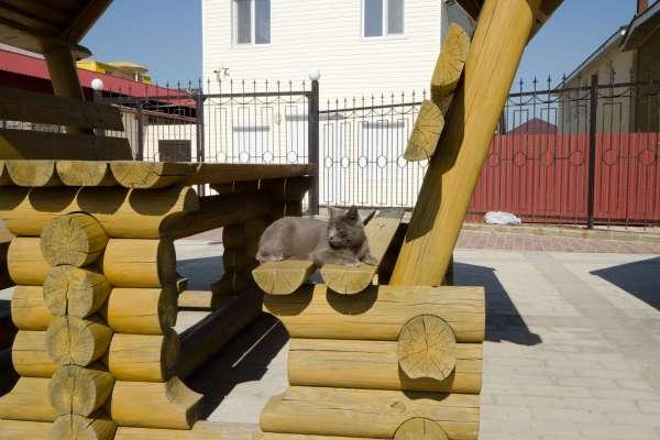Кот. Фото Прибрежного