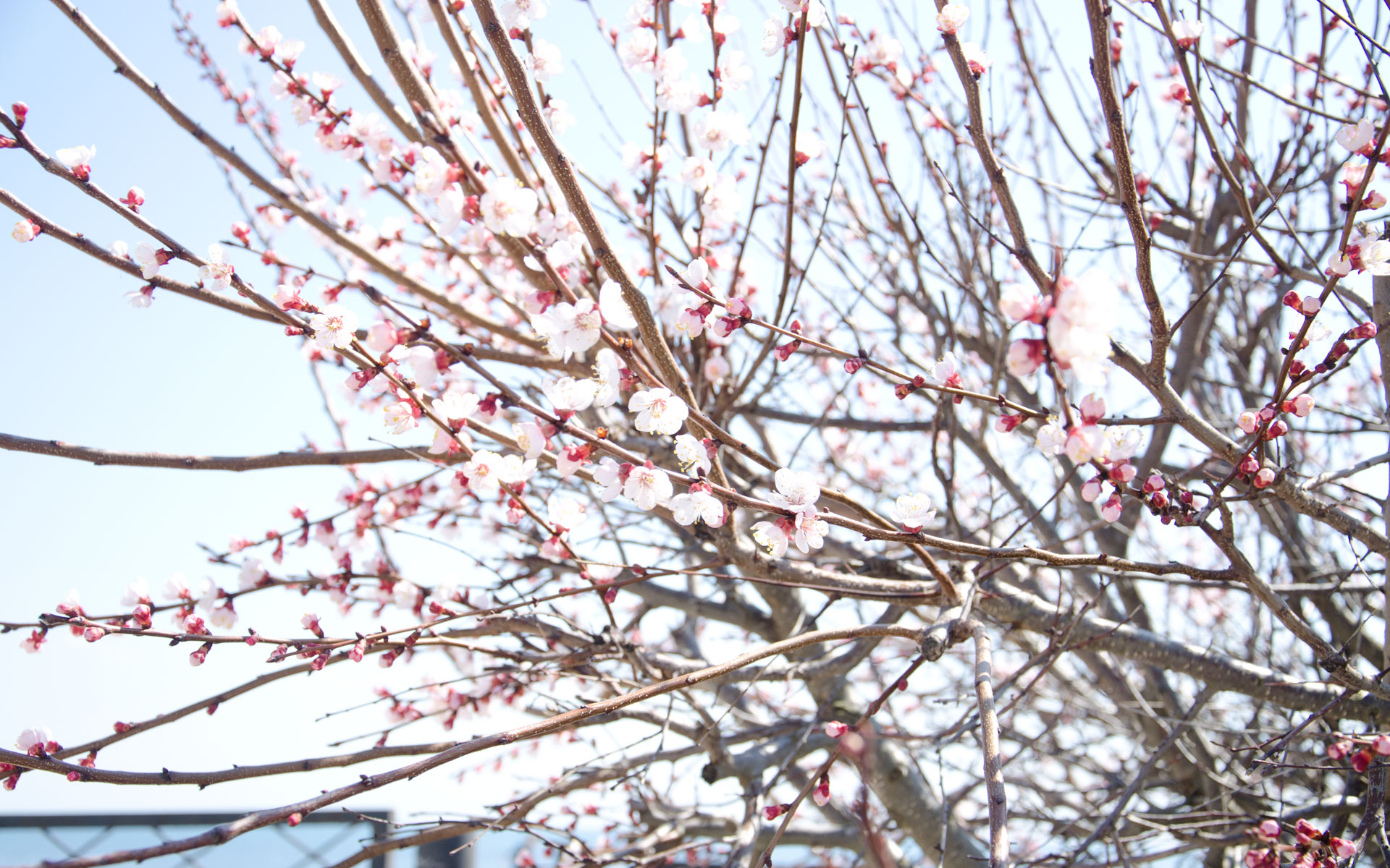 Весна. Фото Крыма