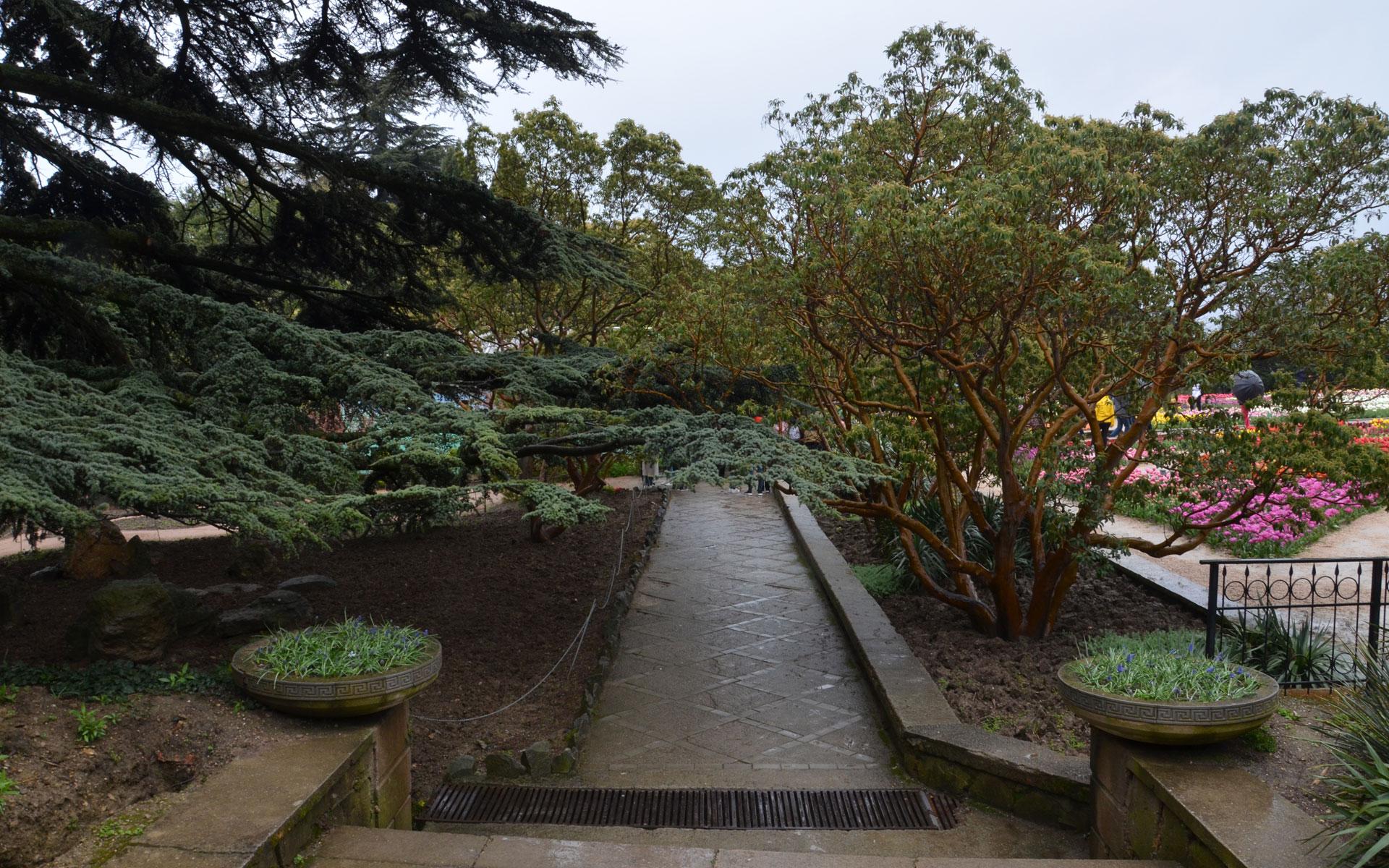 Дорожка в Никитском ботаническом саду. Фото Никита