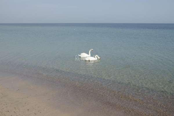 Лебеди в марте 2020. Фото Заозёрного