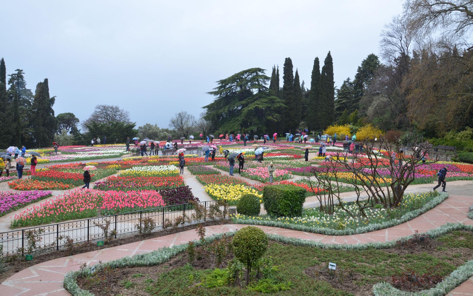 Парад тюльпанов в ботаническом саду. Фото Никита