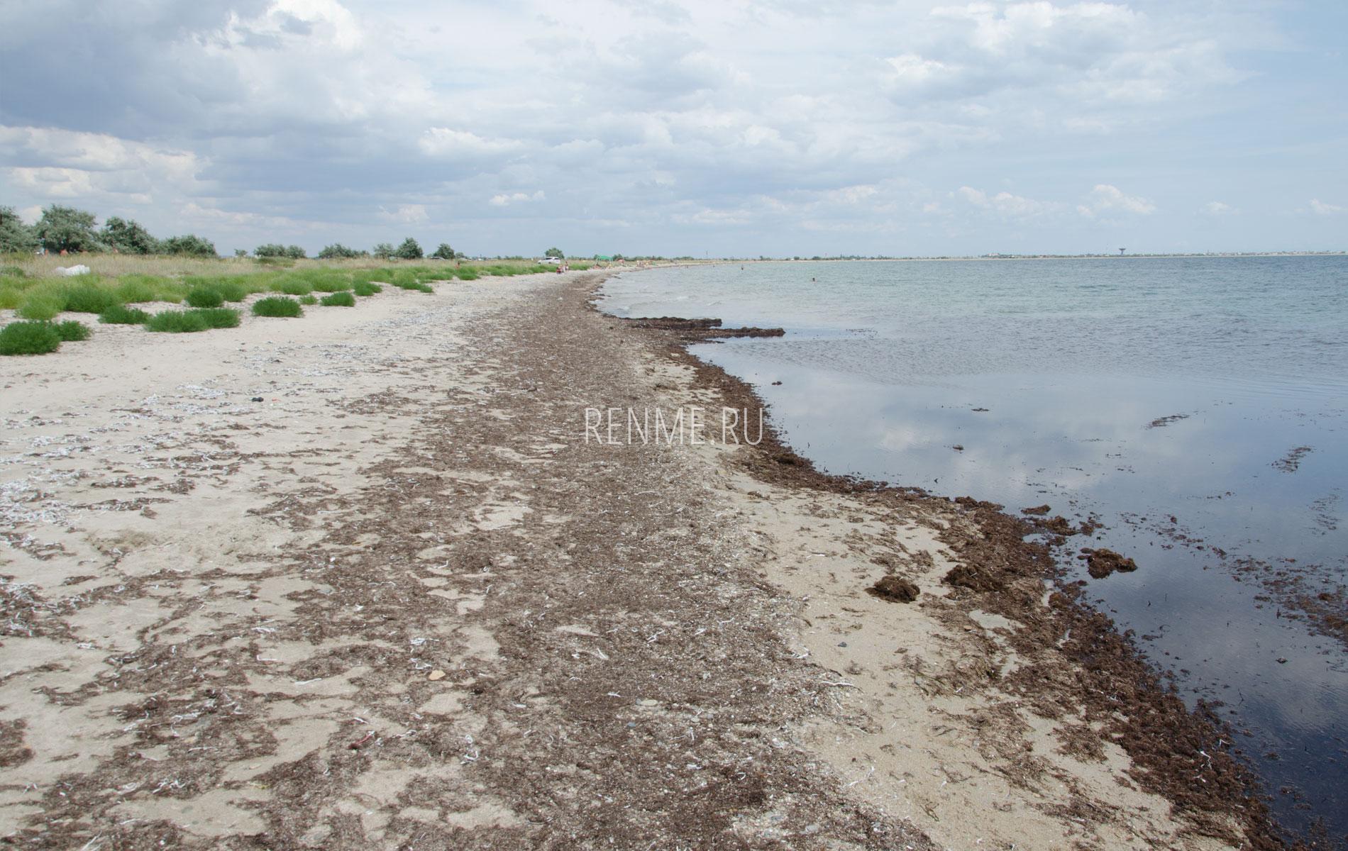 Дикий песчаный пляж в Крыму 2019. Фото Молочного